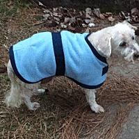 Adopt A Pet :: Elliott - Hampton, VA