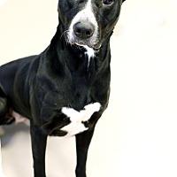 Adopt A Pet :: Sadie - Appleton, WI