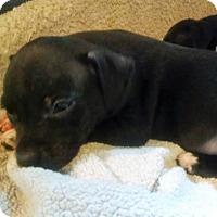 Adopt A Pet :: Maybelle - Austin, TX