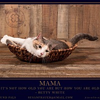 Adopt A Pet :: Mama - St. Louis, MO