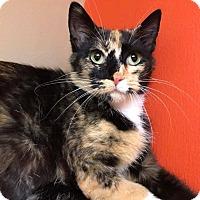 Adopt A Pet :: Cali - Maryville, MO