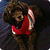 Adopt A Pet :: Lady (Owner Surrender) - Madison, WI