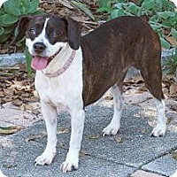 Adopt A Pet :: Rosie - Minneola, FL