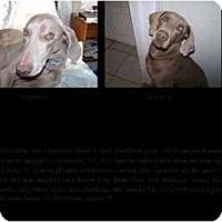 Adopt A Pet :: Gertrude - Attica, NY