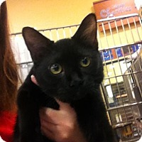 Adopt A Pet :: Mandy - Muncie, IN