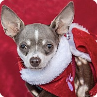 Adopt A Pet :: Poppy - San Marcos, CA