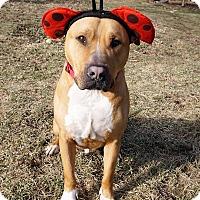 Adopt A Pet :: Bear - Bruce Township, MI