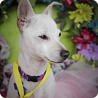 Adopt A Pet :: Topeka - Hamilton, ON