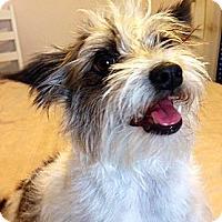 Adopt A Pet :: Tinker - McLoud, OK