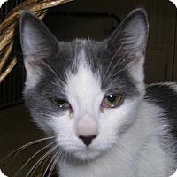Adopt A Pet :: Priti - Chicago, IL