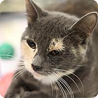 Adopt A Pet :: Topaz - Sacramento, CA