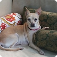 Adopt A Pet :: Sophie (Sophia) - Framingham, MA