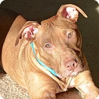 Adopt A Pet :: Santos - Reisterstown, MD