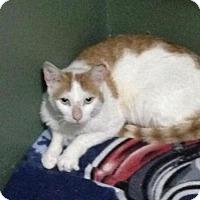 Adopt A Pet :: Coop - Hamilton, ON
