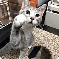 Adopt A Pet :: Toby - McDonough, GA
