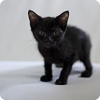 Adopt A Pet :: Berry - Jefferson, NC