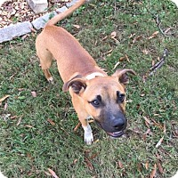 Adopt A Pet :: Charlie - Arlington, TN