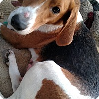 Adopt A Pet :: Shelly - Benton, PA