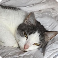 Adopt A Pet :: Gertie/KK - White Bluff, TN