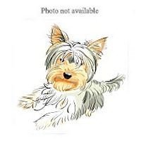 Adopt A Pet :: URGENT ON 4/22  San Bernardino - San Bernardino, CA