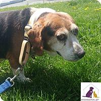 Adopt A Pet :: Ruckas - Eighty Four, PA