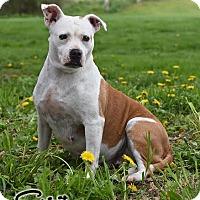 Adopt A Pet :: Spirit - Broadway, NJ