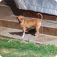 Adopt A Pet :: Sisi - San Diego, CA