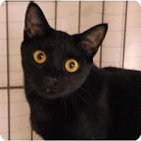 Adopt A Pet :: Luna - Lunenburg, MA