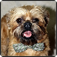 Adopt A Pet :: SPARKY - ADOPTION PENDING - Little Rock, AR