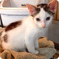 Adopt A Pet :: Dirty Harry - McDonough, GA