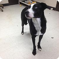 Adopt A Pet :: Kate - Willington, CT