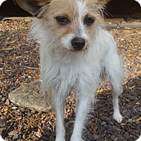 Adopt A Pet :: Valentine-Adoption pending - Bridgeton, MO