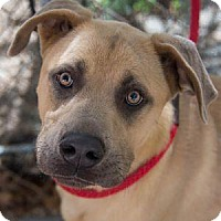 Adopt A Pet :: NICO - Decatur, GA