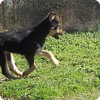Adopt A Pet :: Twizzler pending adoption - Manchester, CT