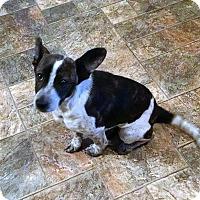Adopt A Pet :: Blaire - Greensboro, GA
