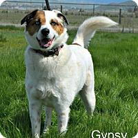 Adopt A Pet :: Gypsy - Yreka, CA