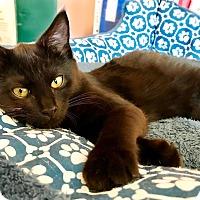 Adopt A Pet :: Luke - Virginia Beach, VA