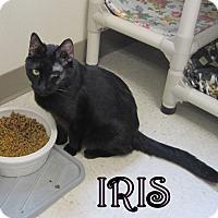 Adopt A Pet :: Iris - Gaylord, MI