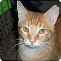 Adopt A Pet :: Tom-Tom - Lombard, IL