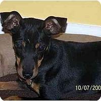 Adopt A Pet :: Missy - Nashville, TN