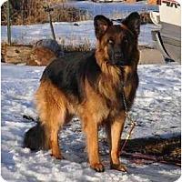Adopt A Pet :: Windsor - Hamilton, MT