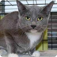 Adopt A Pet :: Amy - Modesto, CA