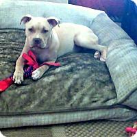 Adopt A Pet :: DAISEY - Higley, AZ