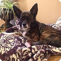 Adopt A Pet :: Princess - Knoxville, TN