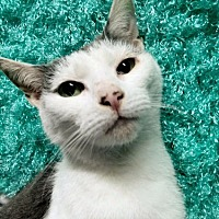Adopt A Pet :: Lily Atherton - Princeton, NJ