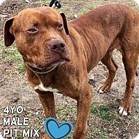 Adopt A Pet :: Chester - Jackson, NJ