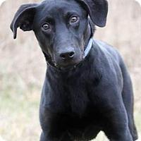 Adopt A Pet :: Dani - Pardeeville, WI