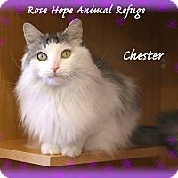 Adopt A Pet :: Chester - Waterbury, CT