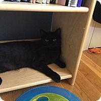 Adopt A Pet :: Pick - Salisbury, MA