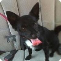 Adopt A Pet :: Craig - Hancock, MI